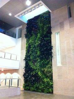 Nedlaw Living Walls Function