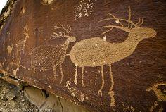 Nefertiti Elk by IntrepidXJ, via Flickr