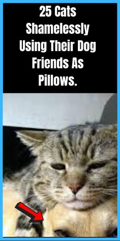 25 Cats Shamelessly Using Their Dog Friends As Pillows. Black Friday 2019, Best Black Friday, Thing 1, Psychology Books, Self Publishing, Life Science, Dog Friends, Bestselling Author, Books Online