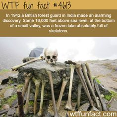 Wow Facts, Wtf Fun Facts, Funny Facts, Random Facts, Strange Facts, Random History Facts, Strange History, The More You Know, Did You Know