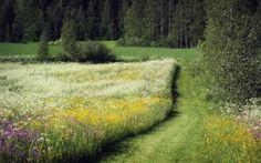 prado, Flores, bosque, Los rboles, verano, carretera