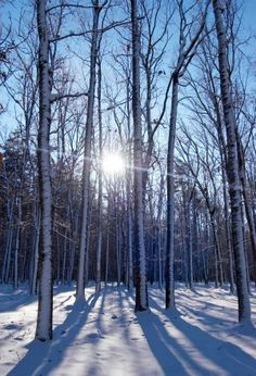 Sun through the trees.