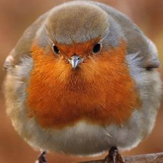 Puffy Bird