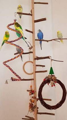 Budgie picture: Christmas decoration in the bird tree - Budgie portal ., The bird cage is both a home for your chickens and a pretty tool. You can select whatever you need one of the bird cage versions and get a whole lot more particular images. Budgie Toys, Parrot Toys, Love Birds, Beautiful Birds, Beautiful Pictures, Cockatiel Cage, Diy Bird Cage, Diy Bird Toys, Bird Stand