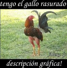 Jajajaja jajajaja que naca!!!