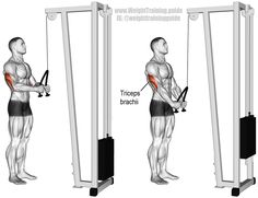 """Triceps rope pushdown. An isolation exercise. Target muscle: Triceps Brachii. Synergists: None. See """"Comments and tips"""" on site to learn which triceps exercises were found in one study to be the most effective."""