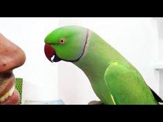 Conversation with my parrot,Worlds best Bird. - YouTube