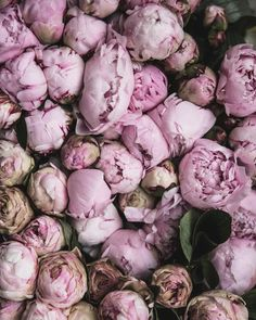 Peonies upon peonies at the Aligre market one of @olaiyaland & my many stops on our whirlwind weekend retreat in Paris. We're saying goodbye to our guests this morningold friends & newand then taking a day to rest cook and tidy up. A slow Sunday. #localmilkretreats #peonies #theartofslowliving | ps. Does anyone have any home kitchen children's and clothing etc shopping recommendations in Paris? We hit up Merci but are looking for more to explore this week! by local_milk