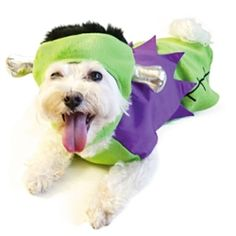 This Frankenstein dog costume comes with head knobs! How funny!