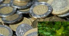 atraer dinero: ¡COLOCA ESTO EN UN FRASCO Y OBSERVA CÓMO CAMBIA TU VIDA! #COMPÁRTELO ALGUIEN LO PUEDE NECESITAR