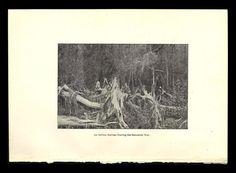 Seminole War Retreat 1896 Florida Photo Book Illustration Print