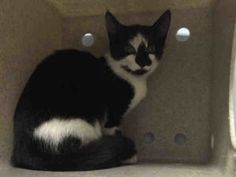 **UNKNOWN   09/11/16** JASPER IS JUST A KITTEN & IS SCARED IN THE SHELTER!! At just four months old, Jasper is facing an untimely death tomorrow. Jasper could have possibly spent his whole life on the streets of NYC, fending for himself and trying to survive. Now he is locked up in a cage and will die tomorrow. Jasper needs a loving, comfortable home where he can feel safe and appreciated. Give that to Jasper before his time runs out!