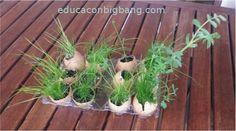 planta semillas en cáscara de huevo