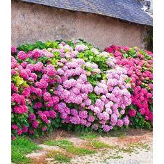 43 Besten Heckengestaltung Bilder Auf Pinterest Garden Plants