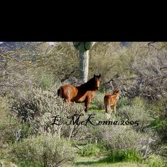 Salt River Wild mare and foal 2005. Pls go to Salt River Wild Horses Facebook page to see how you can help to save these endangered wild horses of the Arizona Salt River.