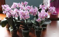 Csak egy orchideád van, és szaporítani szeretnéd? Mondjuk, hogyan csináld! - Filantropikum.com Doritos, Garden, Flowers, Decor, Garten, Decoration, Lawn And Garden, Gardens, Decorating