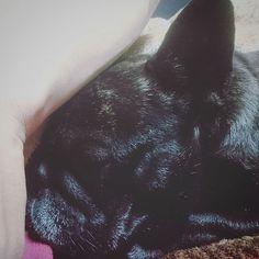 #おはよう  #フレンチブルドッグ #フレブル#ブリンドル#犬バカ部 #はなぺちゃ#愛犬#犬#frenchbulldog#frenchie#dog #petstagram  #lile4like#l4l#tagsforlikes#tflers#follow4follow#f4f #cute #eyes #pet #pets #animal #animals #lovedogs #hound #adorable #doglover #instapuppy
