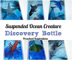 Make an ocean creature discovery bottle where the creatures stay in place   Preschool Inspirations