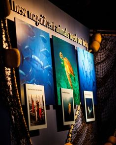 Science Fair: What is Conservation?