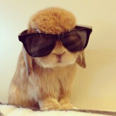 Animals with sunglasses - photo#5