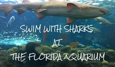 "Be a part of the exhibits at the Florida Aquarium in Tampa!  Check out their ""Swim with Sharks"" experience to get in the tanks to swim with various flsh, eels, rays and sand tiger sharks."