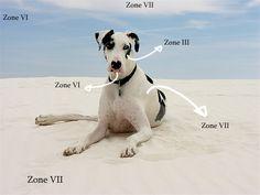 Understanding & Using Ansel Adam's Zone System