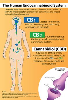 Cannabinoids and their Effects on Humans | < 4° us ⌸ (invite-) https://de.pinterest.com/will_robins/cbd-visual-graphics/