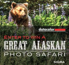 Win a Great Alaskan Photo Safari! Click for details: http://blog.sigmaphoto.com/2014/win-great-alaskan-photo-safari/