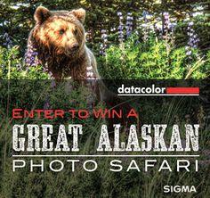 Win a Great Alaskan Photo Safari! Click for details: http://blog.sigmaphoto.com/2014/win-great-alaskan-photo-safari/