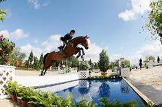 springen paarden sloot - Google zoeken