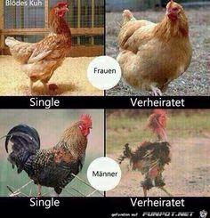 lustiges Bild 'Single oder verheiratet.jpg'- Eine von 14329 Dateien in der Kategorie 'witzige Bilder' auf FUNPOT.