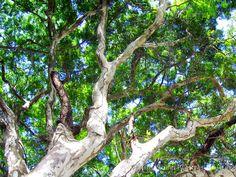 Na sombra das árvores