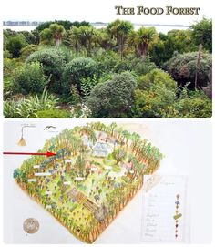 Temperate Climate Permaculture Food Forest - organictalks.com