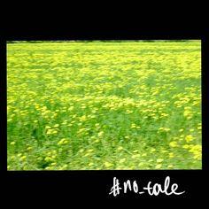 No tale #skantzman #no_tale #heraklion #crete #spring #colour #velvia #xpro1 #35mm #manolisskantzakis #photography #field #flowers