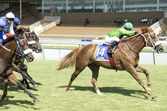 Scottsville 18/02/15 Race 5: FM 76 HANDICAP (F & M) 1400m  Winner: UMOYANA  Ravishing x Gentle Breeze  Bred By: Summerhill Stud (Pty) Ltd.  Owner: Messrs C J J Harrison, M M C Lopes Pereira, F H Phillips and Ms C E Bentley.  Trainer: A J Rivalland  Jockey: Mandla Ntuli   Gold Circle Photo