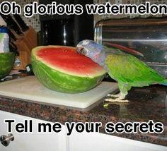 Cute wittle parrot x,D