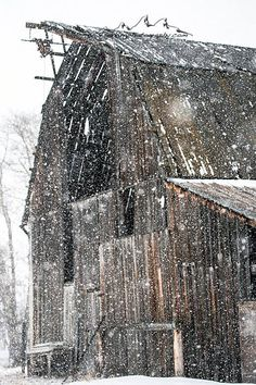 Spring Snow Storm in March.. Old Barn.. Victor Idaho..