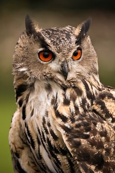 The Owl Model by Andreas Saatze on 500px .