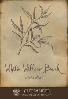 33a1b7777ba White willow bark. A natural remedy used in the 18th century to treat  rheumatism