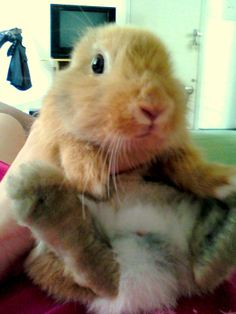 Chubby!