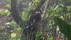 Monteverde, Costa Rica, Plants, Plant, Planets