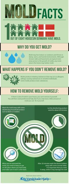 Prevent Mold From Causing Home Damage - Mold - Platinum Pest Solutions