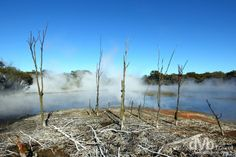A pictorial look at Rotorua, the tourist hotbed of New Zealand's North Island, a rotten eeg-smelling geothermal wonderland full of geysers & bubbling mud pools. Rotorua New Zealand, New Zealand North, Travel Images, South Pacific, Niagara Falls, Travel Photography, Australia, Island, Park