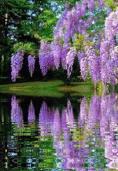Beautiful Nature Pictures, Beautiful Nature Wallpaper, Amazing Nature, Beautiful Landscapes, Beautiful Gardens, Amazing Flowers, Purple Flowers, Beautiful Flowers, Beautiful Gif