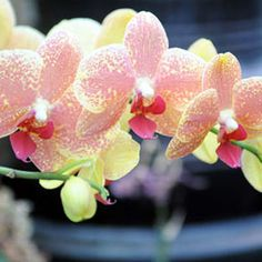 1000 Images About Plants To Grow On Pinterest How To