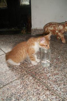 Filhotinho bebendo água no copo - 3 meses