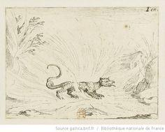 [La vie de la Mère de Dieu représentée par des emblèmes]. [1], [Salamandre marchant dans les flammes] : [estampe] / [Jacques Callot] - 1