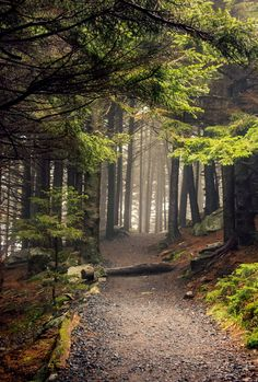 Appalachian Trail (Roan Mountain, North Carolina) by Kaila Appalachian Mountains, Appalachian Trail, Beautiful World, Beautiful Places, Image Nature, Forest Path, Walk In The Woods, Jolie Photo, The Great Outdoors