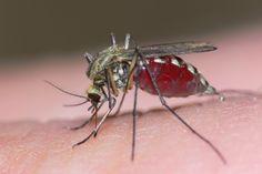 Trampas Caseras para insectos molestos. Mosquitos, moscas del vinagre, cucarachas y pulgas.
