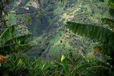 Zwischen den Blättern der Bananenpflanze , dort wo der Kaffee wächst, mit einem wundervollen Ausblick auf die andere Seite des Santa Barbara Tals mit einer weiteren Kaffeeplantage